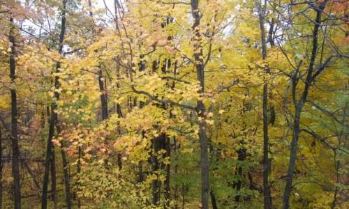 West Bloomfield Seasons